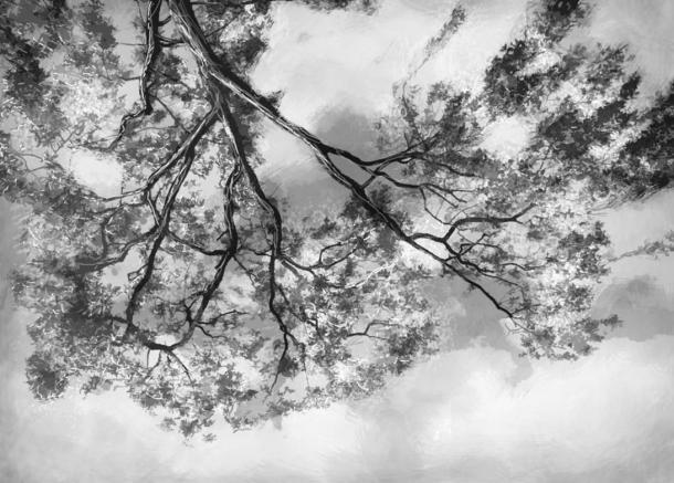 Paul Dienach looking at the sky
