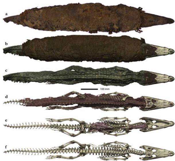 Photo and 3D rendering of the crocodile mummy. (Porcier et al.)