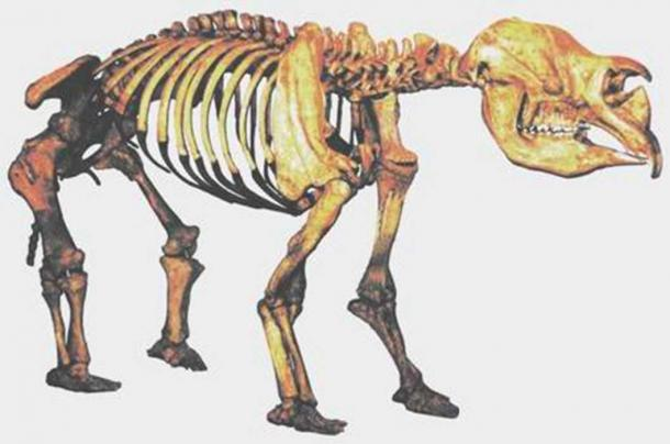 Photo of a cast of a composite Diprotodon skeleton excavated from Lake Callabonna, and on display at the Queensland Museum. The diprotodon was a hippopotamus-sized marsupial, most closely related to the wombat. (Public Domain)
