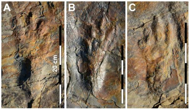 Photographs of well-preserved in situ Batrachopus grandis ichnosp. nov. track impressions. (Image: Kyung Soo Kim, Chinju National University of Education, Kyungnam, South Korea / Nature)