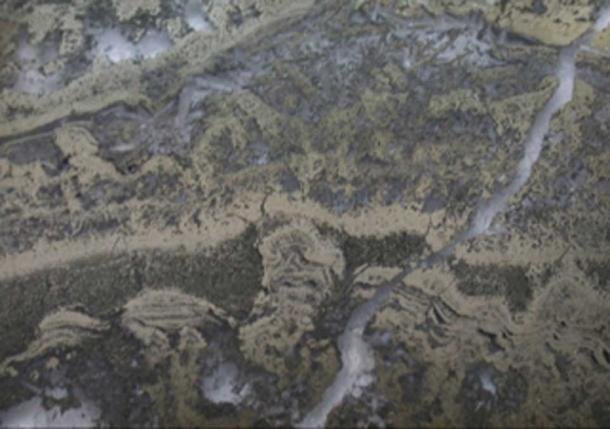 Photomicrograph of pyritized stromatolites containing microbial remains from the 3.5 billion-year-old Dresser Formation. The stromatolites are delineated by pyrite, also known as fool's gold. (UNSW)