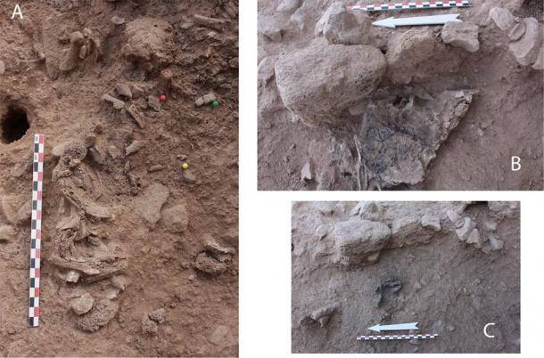 Picture of bones in situ: A. Segment of axial skeleton: ribs and vertebrae exposed in the middle of the structure. B. Right coxal in situ; preserved almost complete by a piece of collapsed mud wall (see Fig 2D). C. Four right pedal proximal phalanges found directly under the right coxal. (© 2020 Bocquentin et al / PLoSONE)