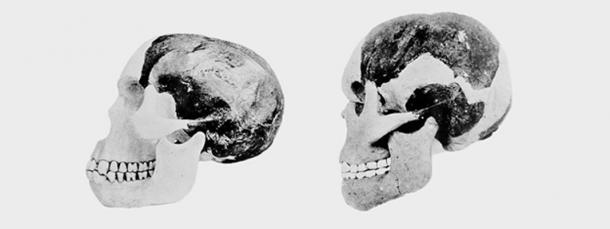 Piltdown Man cranium and mandible as reconstructed by Dr Arthur Smith Woodward (L) and Professor Arthur Keith (R).