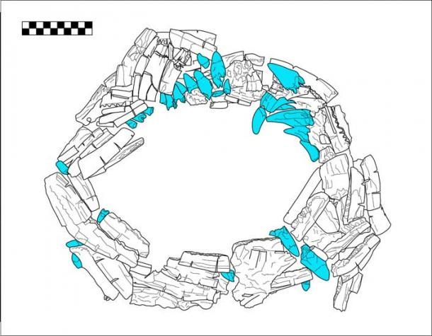 Plan view drawing of deer mandibles and crocodile teeth collar from Burial VIII-36, Plaza A of group 9N-8.  Crocodile teeth are in blue. (Image by N. Sugiyama)