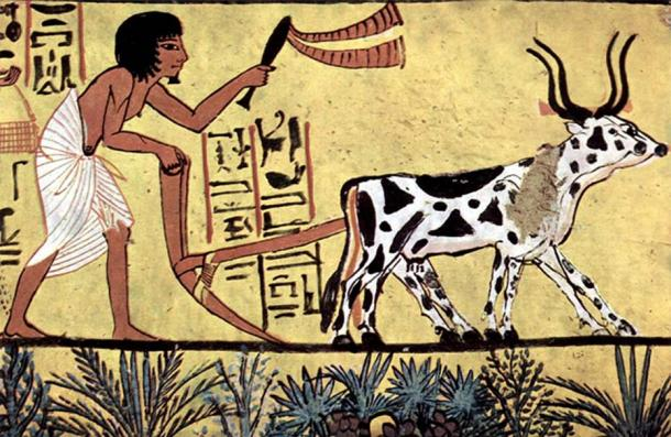 Ploughing with a yoke of horned cattle in Ancient Egypt. Painting from the burial chamber of Sennedjem, c. 1200 BC