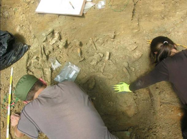 Polish researchers have found 110 mammoths that lived between 30,000 and 25,000 years ago. (P. Wojtal / Science in Poland)