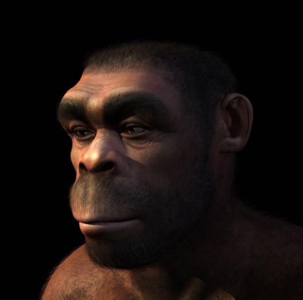 Portrait of a Homo erectus male