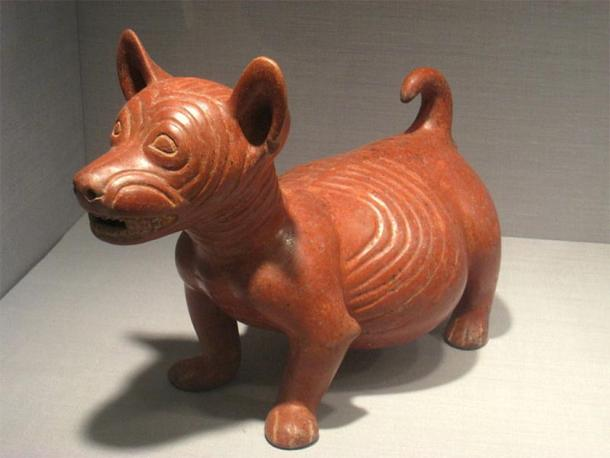 Pot-bellied Dog Figure, Mexico, State of Colima, 200 BC - 500 AD, ceramic, Pre-Columbian collection in the Worcester Art Museum, Worcester, Massachusetts, USA. (Public Domain)