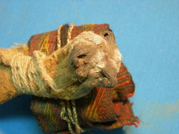 Pouch constructed of three fox snouts stitched together (foreground), and a colorful textile headband. (José Capriles et al, Penn State)