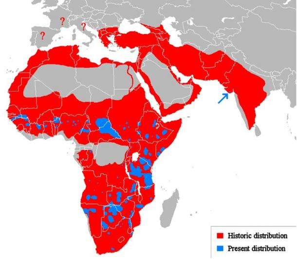 Prehistoric range of the lion in red