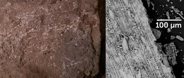 Preserved grass fragments uncovered in a South African cave, left, are by far the oldest known examples of grass bedding, researchers say. Close-up images of those fragments taken by a scanning electron microscope, such as the one shown at right, helped to narrow down what type of grasses were used for bedding. (Image: L. Wadley, Science)