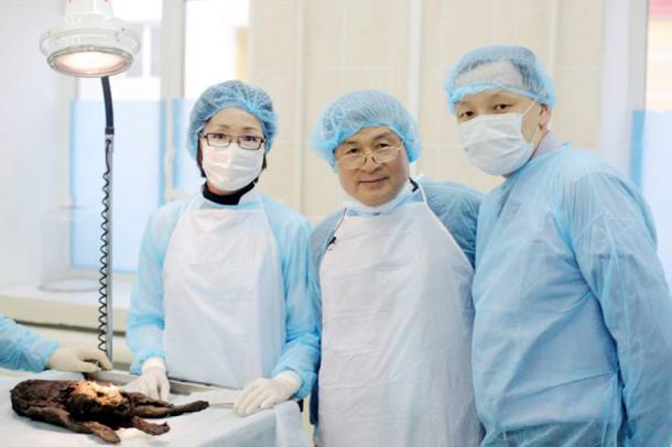 Professor Hwang Woo-suk took the samples from the skin, muscles and ear cartilage.