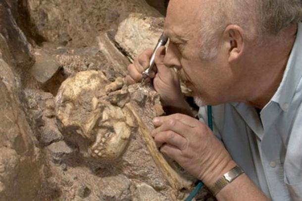 Professor Ron Clarke busy excavating the Little Foot Skull from the Sterkfontein Caves. (Wits University)