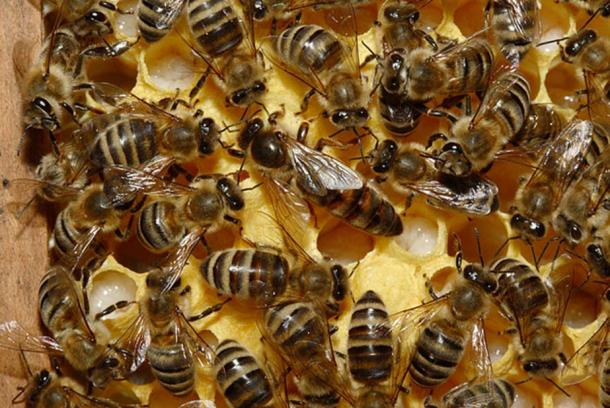 A Queen Bee in a Hive