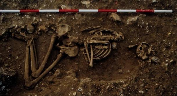 Racton Man's virtually-complete skeleton