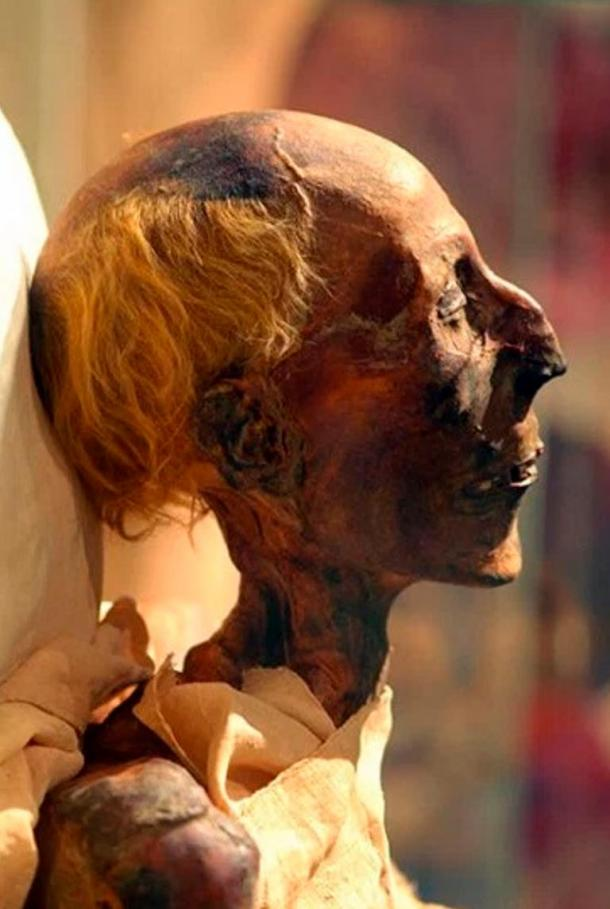 A picture in color of Ramesses II's mummy in profile.