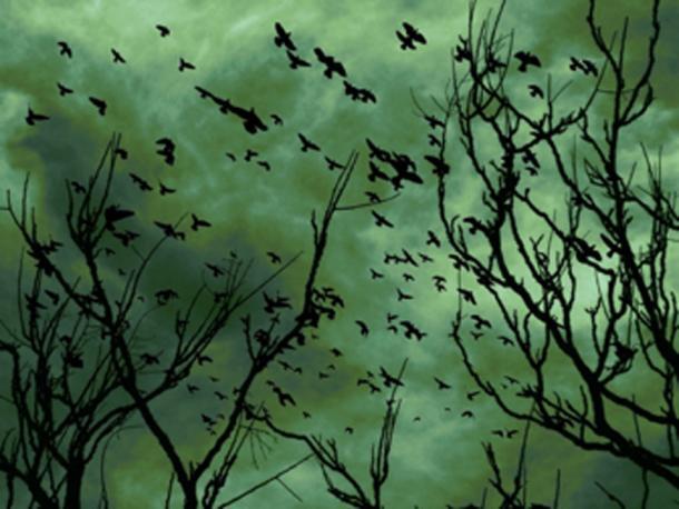 Ravens were generally a bad omen. (Linnaea Mallette / Public Domain)