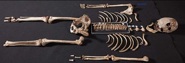 Reassembled skeleton of Cheddar Man, the oldest complete skeleton found in the UK.