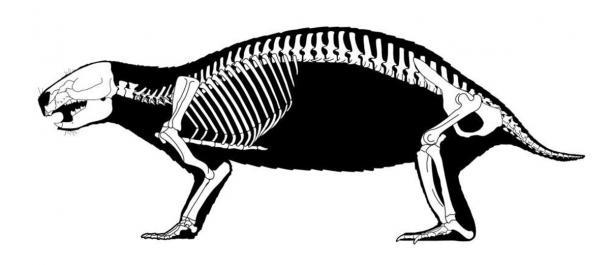 Reconstructed skeleton of Adalatherium hui ('crazy beast') showing the many vertebrae of the species. (Scott Hartman / Nature)