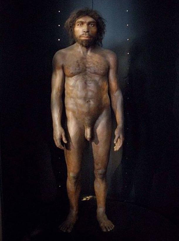 Reconstruction of Homo rhodesiensis based on the Broken Hill cranium