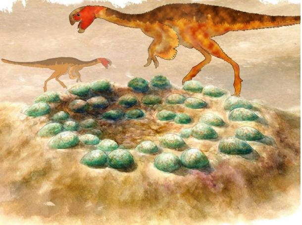 Reconstruction of a clutch of eggs with silhouettes of the oviraptorids