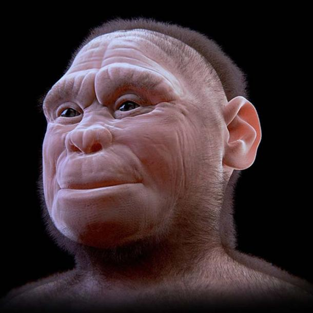 Reconstruction of female Homo floresiensis.