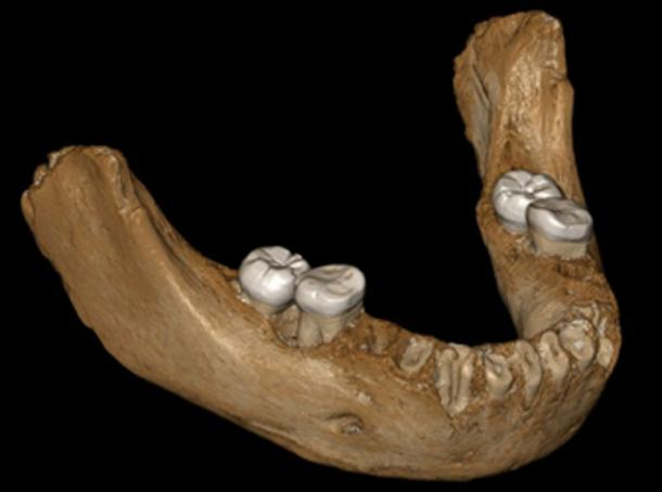 Reconstruction of the Xiahe mandible, now confirmed to be Denisovan in origin. (Jean-Jacques Hublin / Author Supplied).