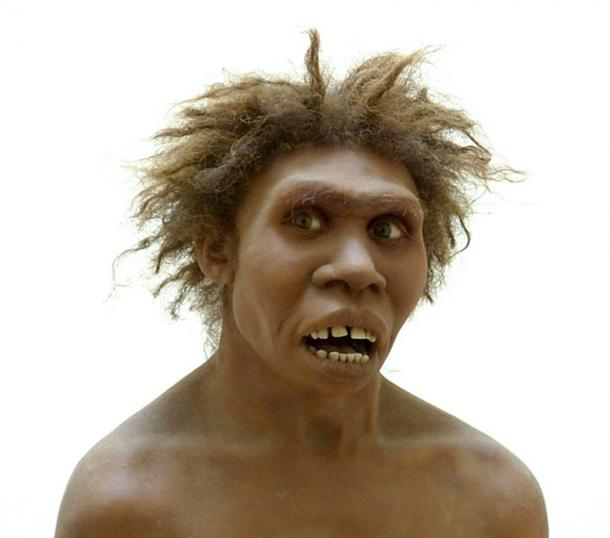 Reconstruction of the so-called Turkana boy. (Musée national de Préhistoire, Dordogne) (CC BY-SA 4.0)