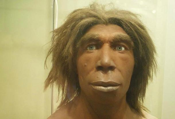 Reconstruction of what a Neanderthal may have looked like in the Museum für Naturkunde, Berlin, Germany. ( כ.אלון/ CC BY SA 3.0)