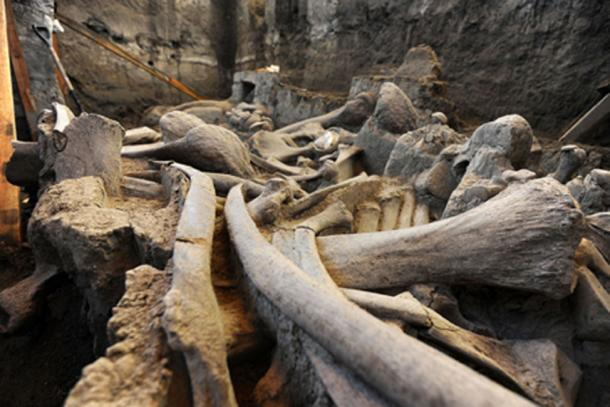 Remains of mammoth found in Tultepec, Mexico State in 2016. (Mauricio Marat / INAH)