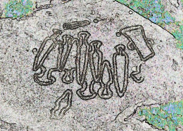 Rendered image detailing the outline of swords and weapons pictured in a rock petroglyph in Galicia, Spain.