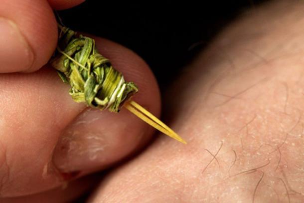 Replica of the Native American tattooing instrument. (Robert Hubner, Washington State University)