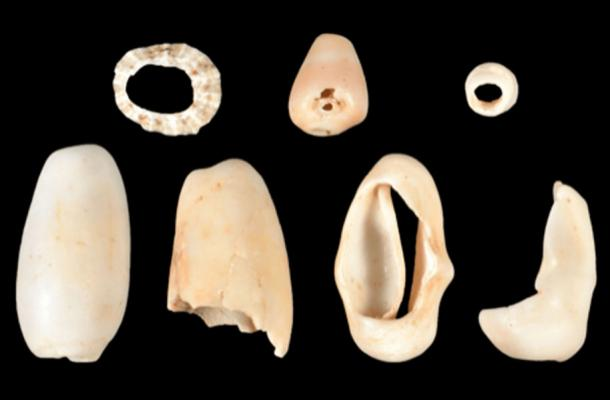 Researchers found a variety of modified shells at the St. Thomas site, including these three beads cut from shell and polished, top row, two beads made from Oliva shells, bottom left, and two Cyphoma shells bottom right. (William Keegan / Florida Museum of Natural History)