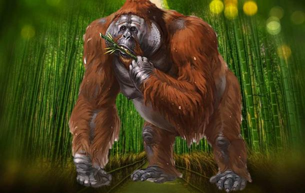 The Real Bigfoot Gigantopithecus Would Have Been