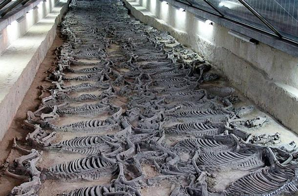 "Hundreds upon hundreds of horse skeletons in the ""Sacrificial Horse Pit"", a burial site believed to have belonged to the tomb of Duke Jing of Qi (547 to 490 BC)."