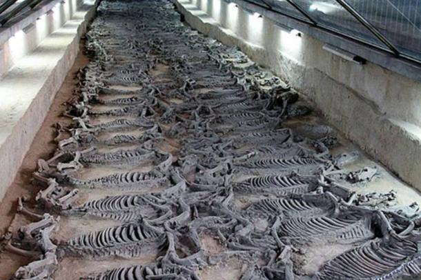 Sacrificial horses discovered in the tomb of Duke Jing of Qi