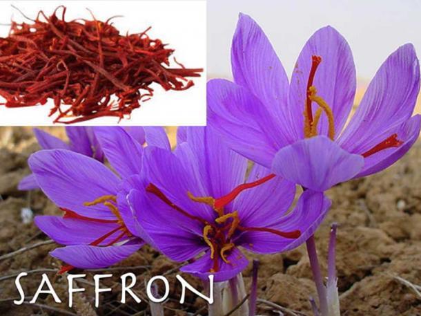 Saffron. (Author Provided)