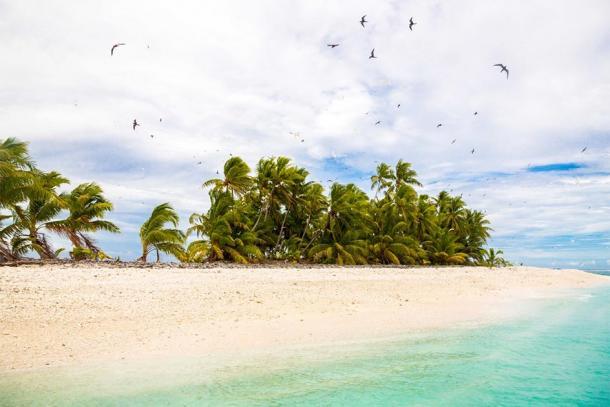 Sandy beach, flock of birds flying. Funafuti atoll, Tuvalu, Polynesia, South Pacific, Oceania. (Dmitry/ Adobe Stock)