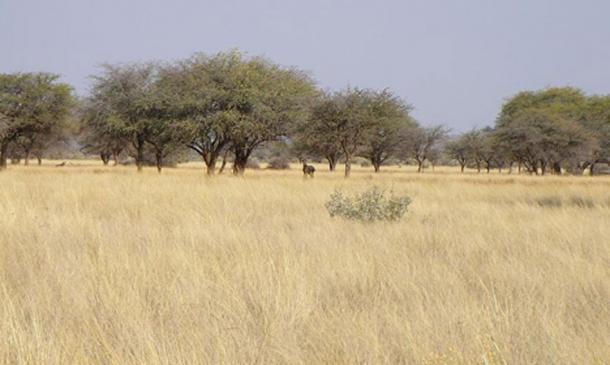 Savanna (and animals) near Kuruman, South Africa. (Public Domain)