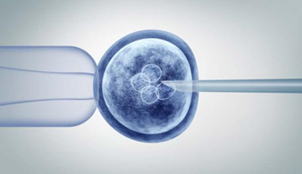 Scientists injected human stem cells into the monkey embryo to create the animal-human hybrid. (freshidea / Adobe Stock)