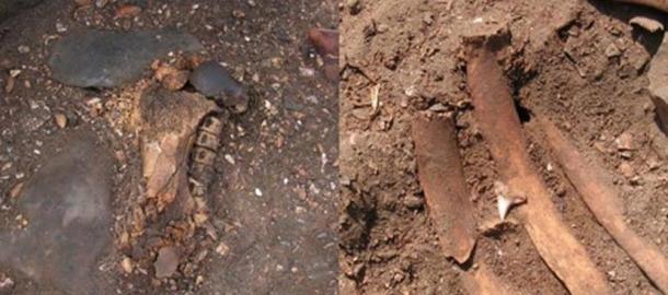 Left: Sea lion femur and blue shark vertebrae. Right: Shark tooth found with burial (Prieto, 2010)