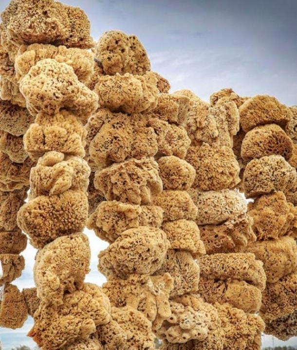 Sea sponges retrieved by divers drying in the sun.