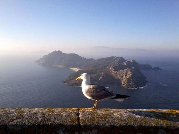 Seagull and the Cíes Islands.