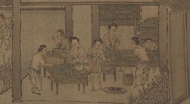 Sericulture (The Process of Making Silk).