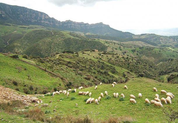 Sheep near Lula, Province of Nuoro, Sardinia, Italy.