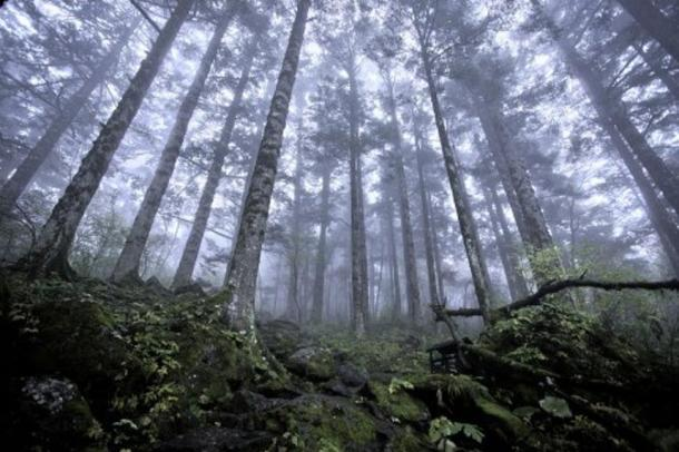 Virgin forest at approximately 8,200 feet (2,500 meters) above sea level in Shennongjia nature reserve in Hubei, China, on Oct. 3, 2012.