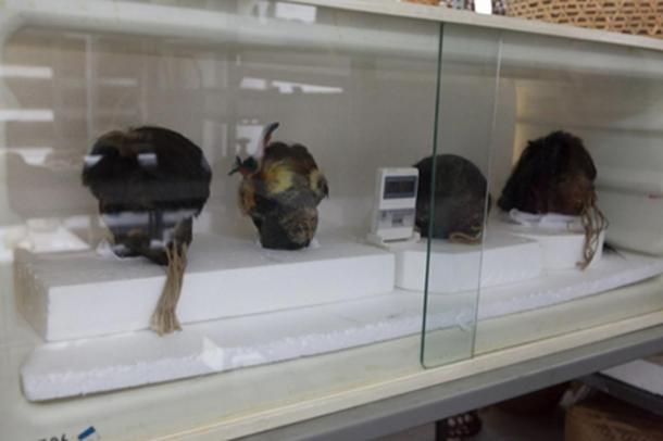 Shrunken human heads in Father Crespi's collection.