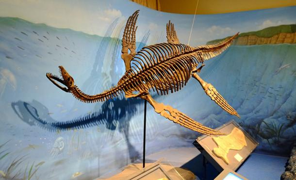 Sightings may have been prompted after dinosaurs' fossils were discovered. Restored skeleton of plesiosaurus. (FunkMonk / CC BY-SA 2.0)