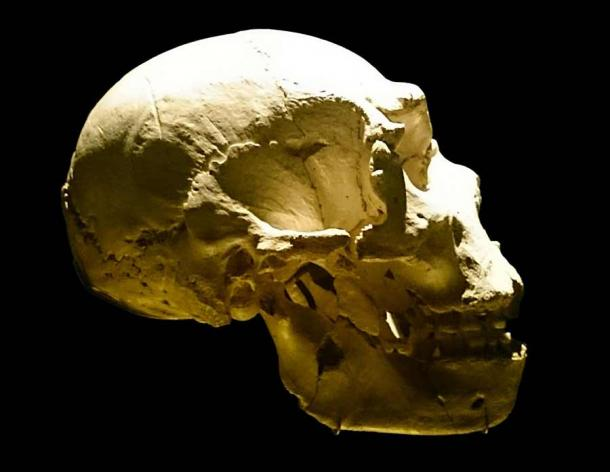 """A Sima de los Huesos skull (pictured here) was also created for the study using a virtual fossil-based reconstruction. The study concluded that this species could not """"hear"""" sounds like Neanderthals could. (UtaUtaNapishtim / CC BY-SA 4.0)"""