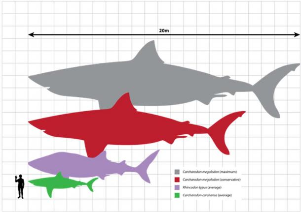 Stay Out of the Water: Does a Prehistoric Shark Still Live